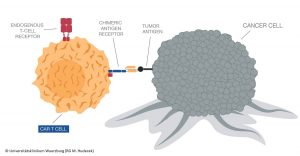 CAR T CELL