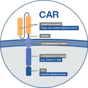 Project CAR T receptor